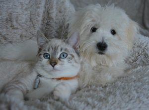 уход за собакой и кошкой в минске