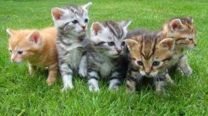 сиделка для кота в минске