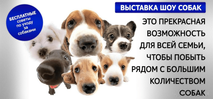 Выставка-шоу собак 3-4 февраля 2018г.    г. Минск,  ул.Даумана 23, крытый спорткомплекс  Время работы: 10.00-19.00